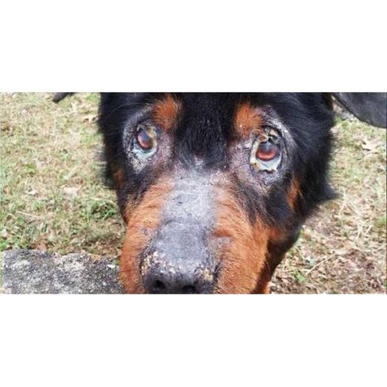 Amos was found as a stray - alone, very sick, suffering, and in desperate need for someone to take pity on him.