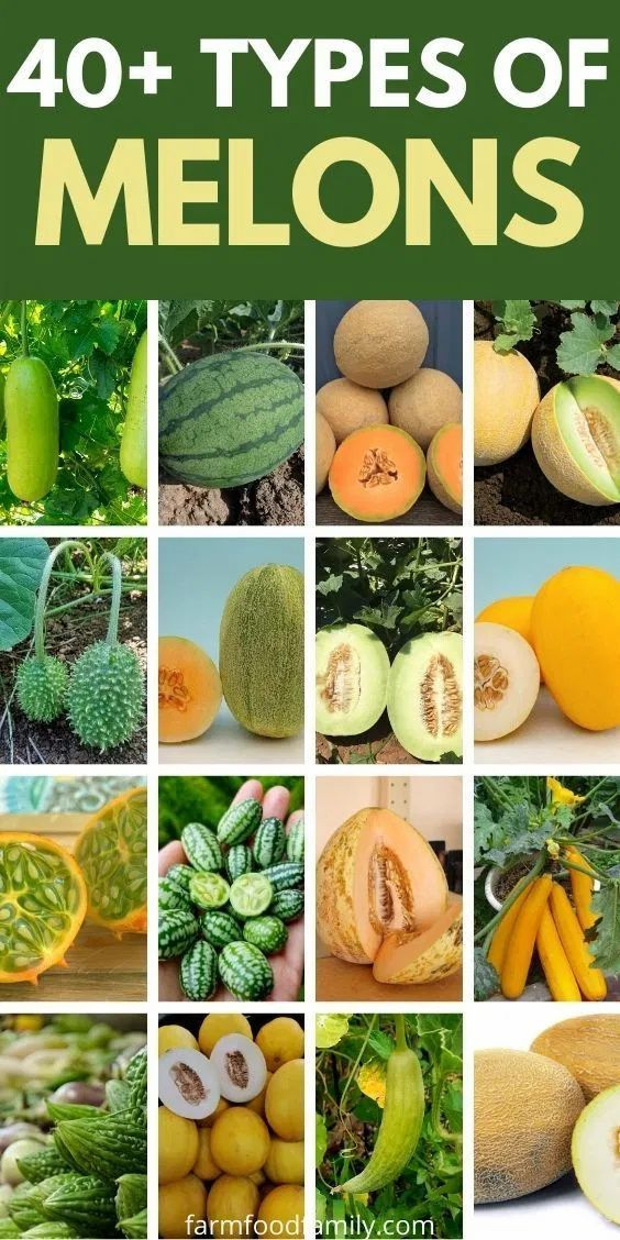40 Different Types Of Melons With Pictures And Fun Facts Cantaloupe And Melon Melon Grow Your Own Food It is a muskmelon that is probably related to the watermelon. 40 different types of melons with