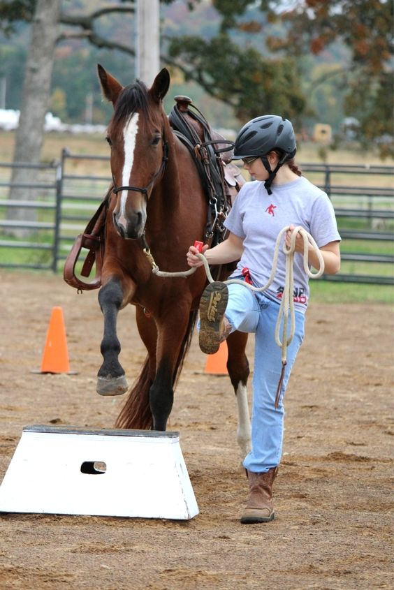 Training a horse in the Equine Science Program @ U of A. Razorback Round-up auction on 11/17!