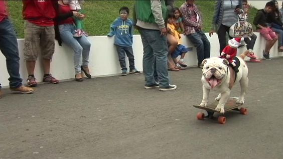 On a roll: Peru's skateboarding bulldog hungry for extreme sports title - Yahoo News
