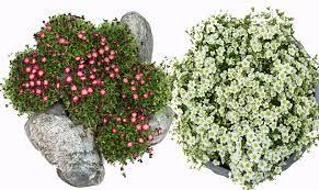 Steinbedplanter
