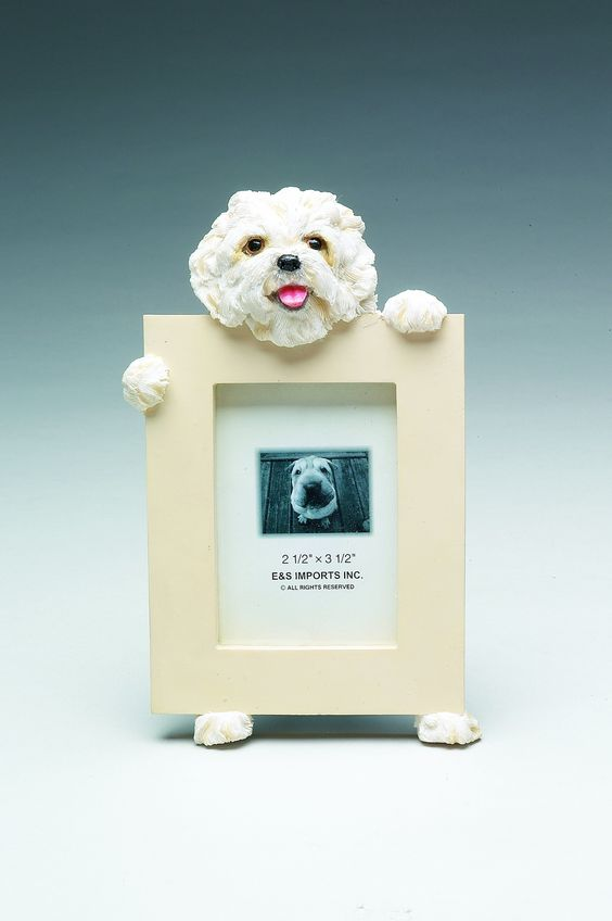 Maltese, Puppy Cut Picture Frame