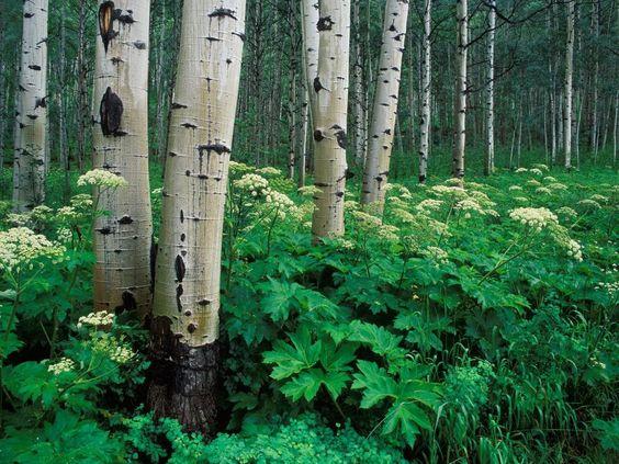 Fond d'ecran et Wallpaper - Forêts: http://wallpapic.be/paysages/forets/wallpaper-28737