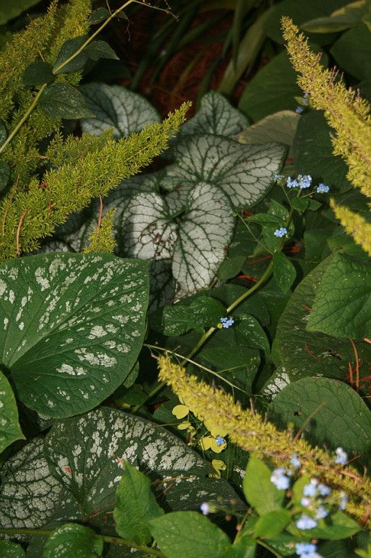 Foliage Color In Shade Plant Leaves Foliage Plants