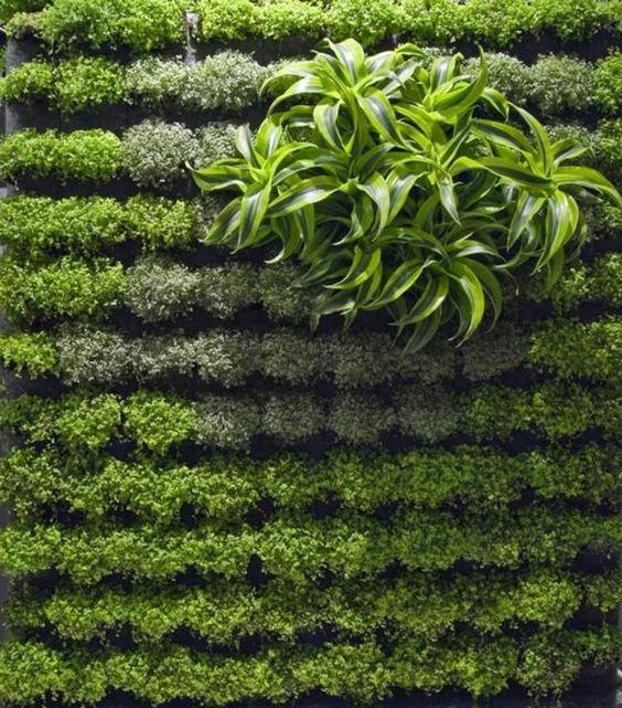 vertikale wände-beleben die urbanen-gärten vegetation-pflanzen