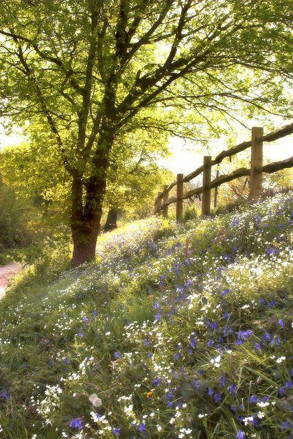 wildflowers. #springtime, #wildflowers