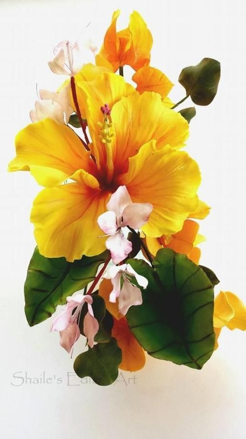 Colors, Hibiscus and Art on Pinterest