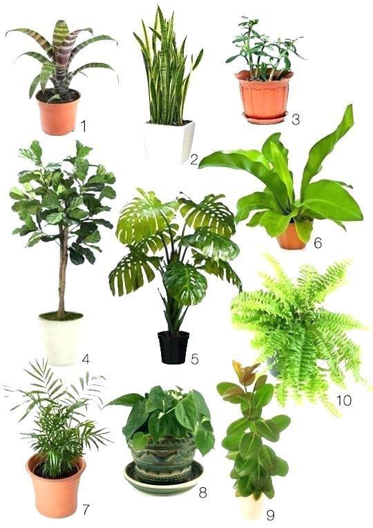 Best Office Plants No Sunlight Indoor Plants Low Light Indoor