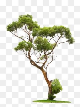 Folha Verde Tree Photoshop Tree Images Tree Clipart