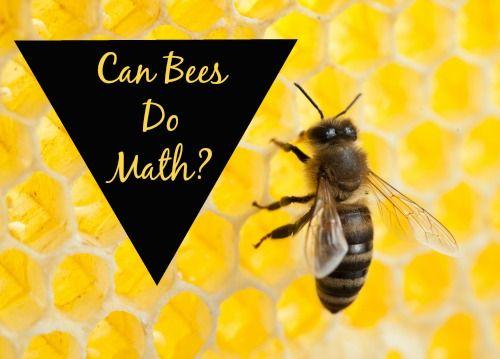 How Do Honey Bees Communicate? | Reference.com