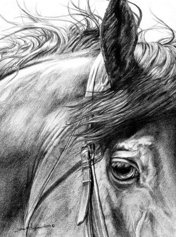 Painting and Artistic Photography: Charcoal Drawings of Horses