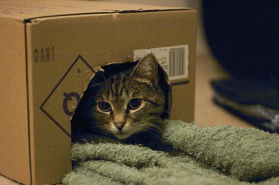 DIY: Cómo hacer los mejores juguetes para Gatos