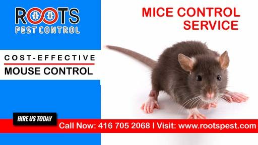 Roots Pest Control Offers Mouse Control Services In Toronto Mice Control Pest Control Getting Rid Of Mice