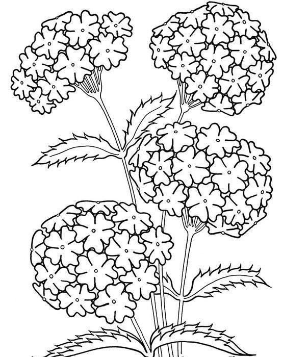 20 Dibujos De Primavera Para Colorear Con Imagenes Dibujos