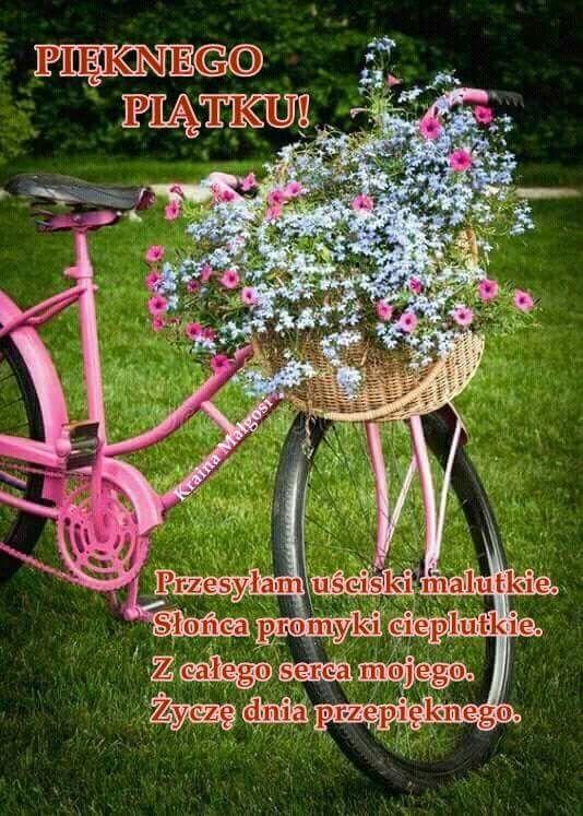 Pin by Wanda Swoboda on Piątek | Rośliny, Kwiatowy, Ogrody