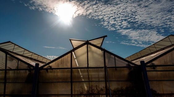 Tinted Solar Panels Can Help Farms Generate Energy and Grow Food