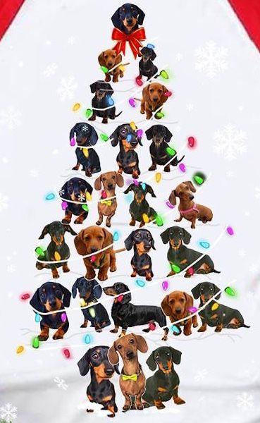 Pin By Lorraine Becerra On Christmas Dachshund Pets Dachshund