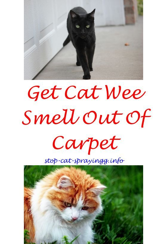How To Remove Cat Spray Odor From Carpet Essential Oils To Stop