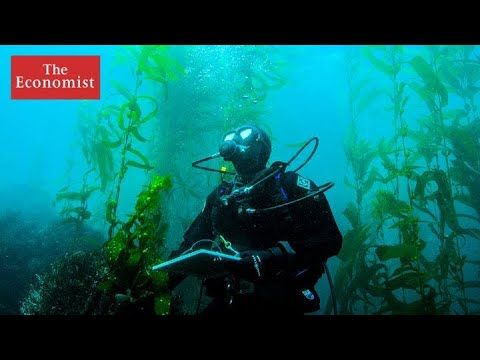 Can Technology Save The Rarest Creatures On The Planet The Economist Mens Dress Watches Creatures Computer Nerd