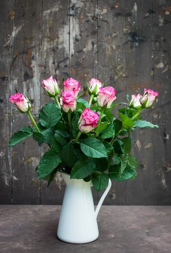Pink Rose Flowers In White Vase Photo Free Plant Image On Unsplash In 2020 Pink Rose Flower Plants With Pink Flowers Rose Wallpaper