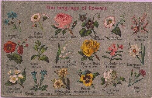 The Language Of Flowers Language Of Flowers Flower Meanings Spring Wedding Flowers