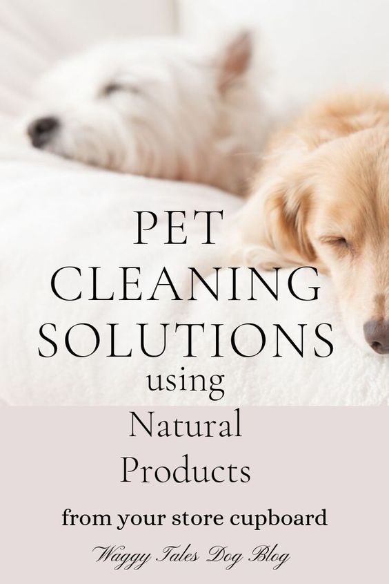 Natural Pet Cleaning Solutions from your store cupboard. Remove stains, reduce dog shedding, keep dog accessories hygienic and smelling fresh! #DogCleaningTips #PetCleaningIdeas #CatCleaningSolutions #DogHygiene #ReduceDogShedding #RemovePetFur #CleaningWithPets #PetHygieneTips #KeepYourHomeClean #NaturalCleaningProducts #CleanWithoutChemicals