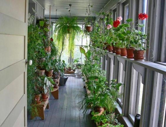 plantes en pots suspendus et montés pouр un mini jardin