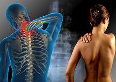 Notícias: Ervas para o tratamento da fibromialgia