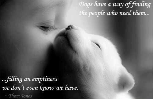 dog quote from American writer Thom Jones