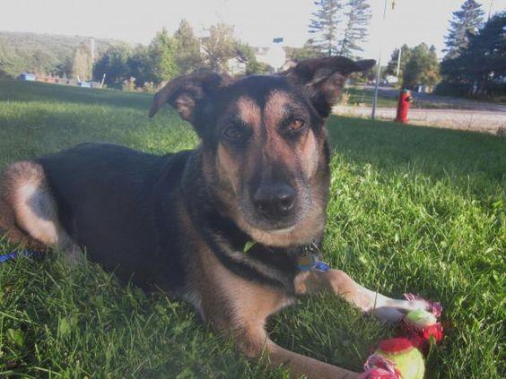 Adopt Geisha On Dog Mixes Dogs German Shepherd Dogs