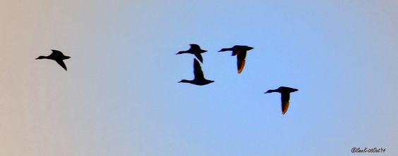 SingleMalt-CapeBreton-NorvellHimself: Wings Aglow
