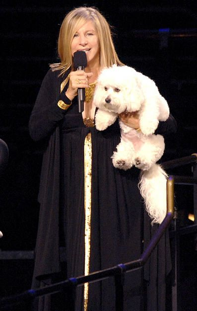 .barbara and bichon...and why not ?!?