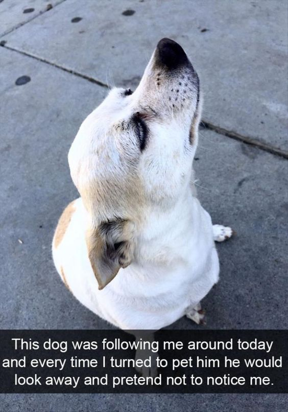 If A Lost Dog Approaches You And You Don T Believe That You Can