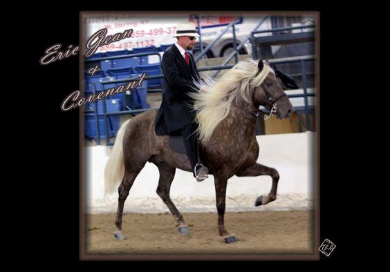 Covenant  rocky mountain horse  dreamrockyhorses.com