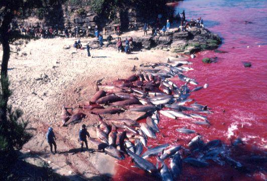 golfinhos mortos na enseada