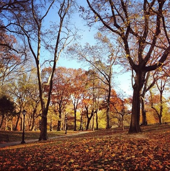 Central Park, NYC Thanksgiving Day 2012 by #newyorkcity on Instagram