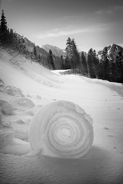 Snow Roller  Back home, winter Jan2014  * the wind was rolled large snowballs! but they kept these tunnels through!