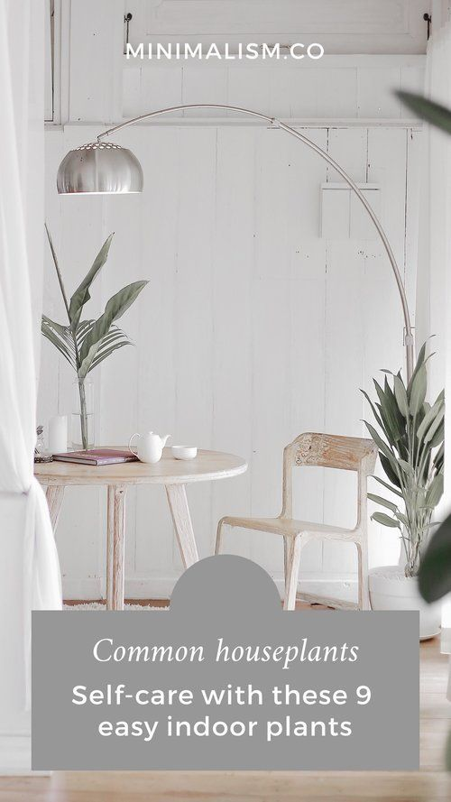 Common Houseplants Self Care With These 9 Easy Indoor Plants Interior Design Pictures Scandinavian Interior Design Interior