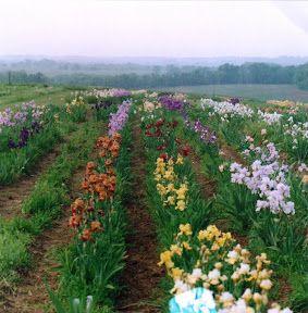 Comanche Acres Iris and Water Gardens | VisitMO.com