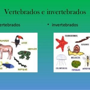 Vertebrados E Invertebrados Diferencias Y Similitudes Daddy Cow Convenience Store Products