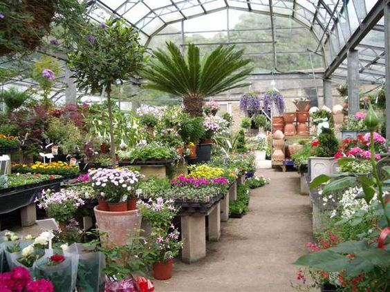 Fall is a great time of year to pick up a huge discount on plants at the local nursery and home improvement center on clearance. There are a couple of tips to choosing plants that... Read More