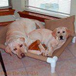 PVC Dog Cot Tutorial = The DIY Girl