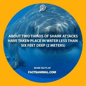 shark-attack-depth