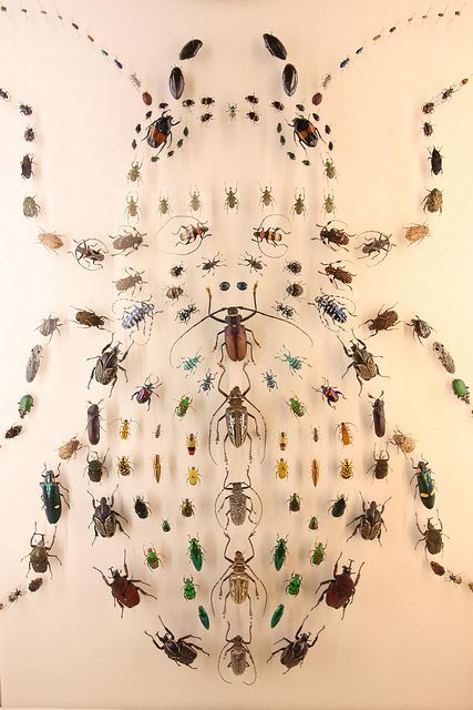 A beetle beetle - Audubon Insectarium, New Orleans by louisianatravel, via Flickr
