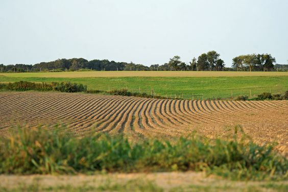 Water Mill - Farm Field