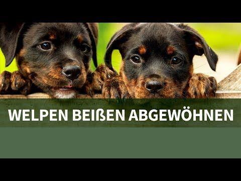 Hundetraining Mit Steffi So Lasst Dein Hund Das Hundespielzeug Wieder Los Youtube Welpen Hunde Welpen Hundchen Training