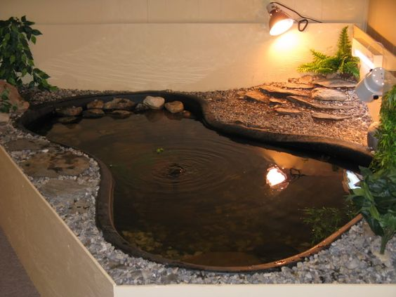 Turtle ponds cr d66a0e9bce741c201a1553143f05c5a5 turtle pond setup waterfall ponds gardening Diy indoor turtle pond