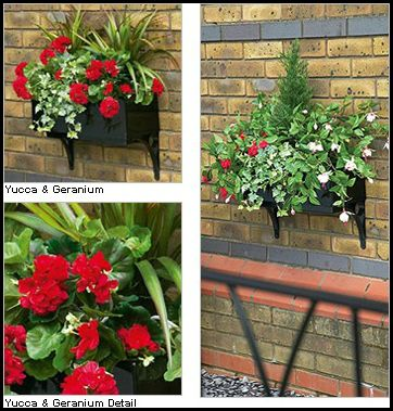 The ultimate guide to hanging baskets popular pins - Summer hanging basket ideas ...