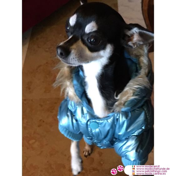 Blau Steppjacke für Hunde #Hunde #Chihuahua - Blau Steppjacke für kleine und mittelgroße Hunde: Kapuze mit Kunstfell lange, um den Hund vor Kälte, Wind und regen Reparatur