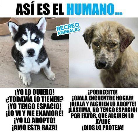 Dos Razas En Una Dogs Perros Labrador Husky Animales Memes Perros Perros Graciosos Perros Chistosos